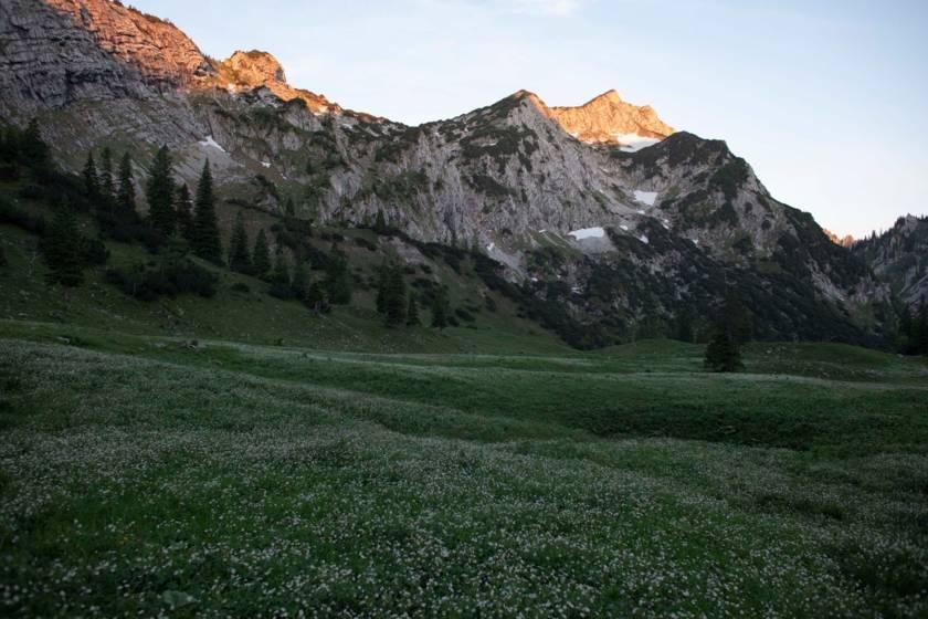 Alpenglühen Grüne Wiese mit Berge 8622