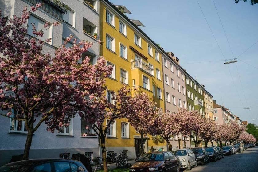 Frühling Blüte Maxvorstadt dm0201