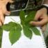 Wer sich bei der gefundenen Pflanze nicht sicher ist, kann mit Apps wie PlantNet prüfen, worum es sich handelt.