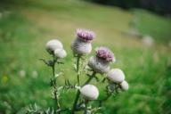 Ein besonderes Naturerlebnis bietet die Flora und Fauna der Berge im Münchner Umland.