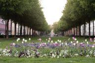 En verano, Bordeauxplatz es un oasis verde en el centro de Haidhausen.