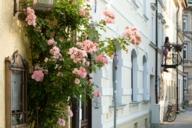 Der Frühling lässt sich überall in der Stadt entdecken – auch an dieser blühenden Häuserwand.