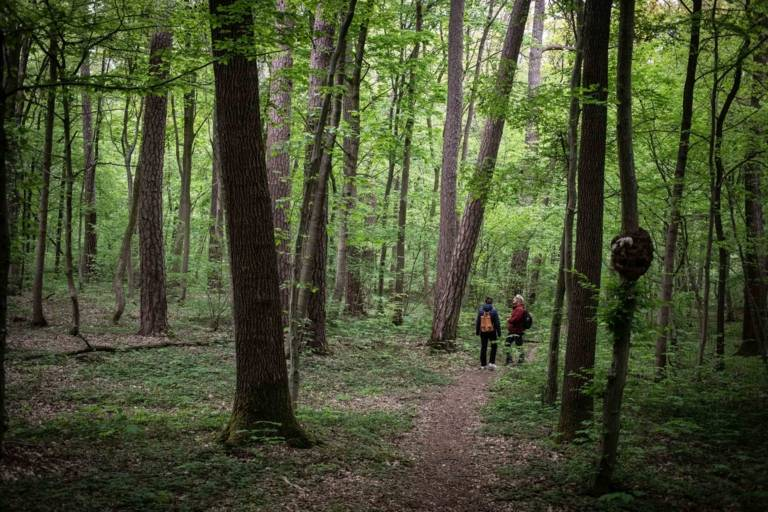 Großaufnahme eines Waldes und zwei Menschen in München.