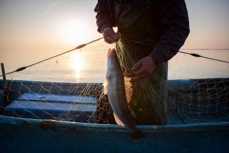 Ein Fischer nimmt auf einem See einen Fisch aus einem Netz.