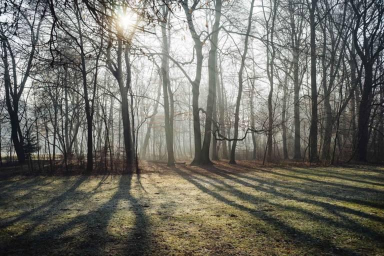 Die Sonne scheint durch den winterlichen Auwald der Isar.