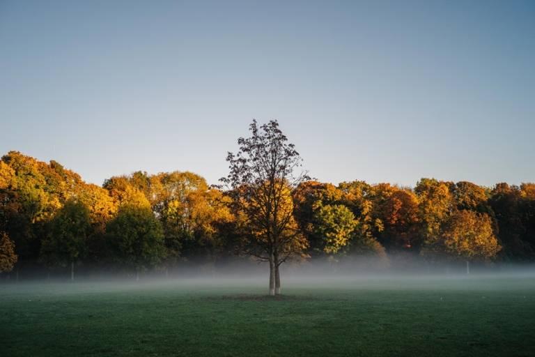 Herbstliche Morgenstimmung im Englischen Garten in München